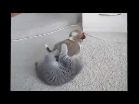 Кошки против собак. Смертельная битва !!!