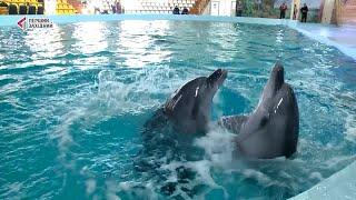 Дельфінотерапія для захисників