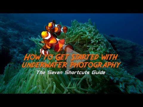 underwater photographer - Ever wanted to be like Jacques Cousteau? Bringing back underwater photos a few decades ago was a lot harder than it is today. You'd need a custom-built housi...