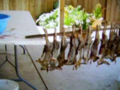 California Rabbit Hunting 09