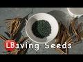 Saving Seeds Meditation | Claude Debussy | VlogSaving Seeds Meditation | Claude Debussy | Vlog<media:title />