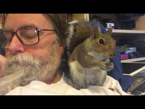 Ricky Tomlinson look alike watching TV with a squirrel (видео)