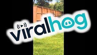 Bear Kills Deer In Residential Neighborhood || ViralHog