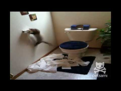 A ferret shreds through an entire roll of toilet paper