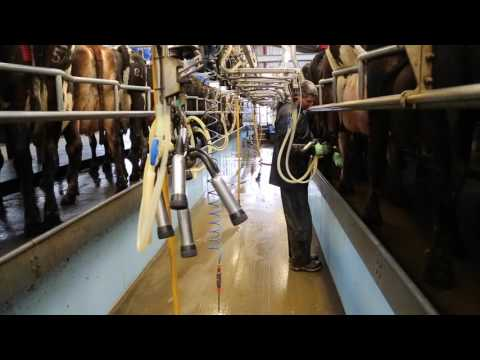 Video Winter housed milking routine download in MP3, 3GP, MP4, WEBM, AVI, FLV January 2017
