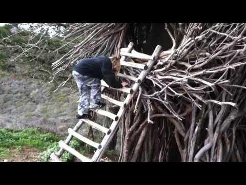 I nidi sugli alberi di Jason Fann