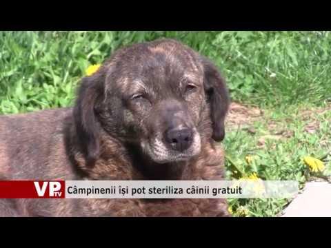 Câmpinenii își pot steriliza câinii gratuit