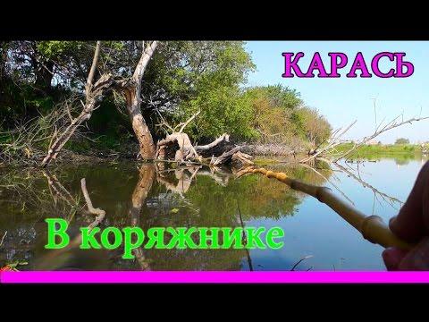 видео о рыбалке на карпа и карася в камыше и коряжнике