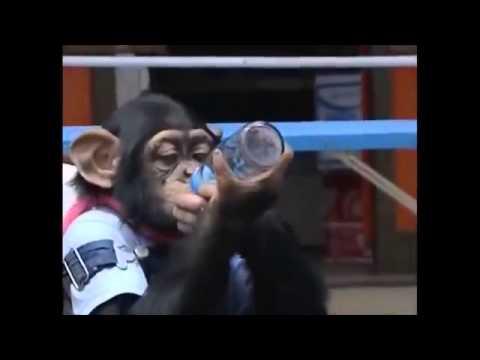 Chú Khỉ Thông Minh Phiêu Lưu Ký 28