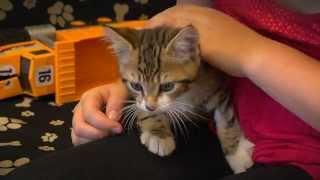 ADVANCE Kitten Care - Kids And Kittens