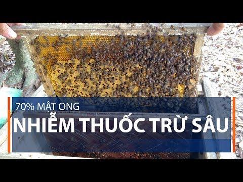 70% mật ong nhiễm thuốc trừ sâu | VTC1 - Thời lượng: 94 giây.