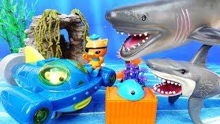 Video Mutant Shark Alert~! Go Octonauts Gup Q, Rescue Sea Creatures - ToyMart TV MP3, 3GP, MP4, WEBM, AVI, FLV Oktober 2018