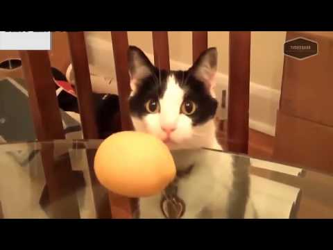 Funny cat videos - SUPER WEIRD CATS that will totally CONFUSE YOU! - Funniest CAT VIDEOS compilation 2018