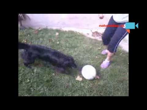 Jak hrát fotbal se psem