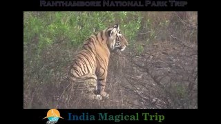 Ranthambore India  city images : Ranthambore National Park - India Magical Trip