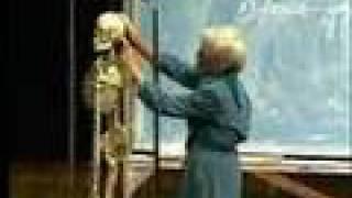Integrative Biology 131 - Lecture 02:  Skeletal System