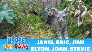 Sick homeless family of kittens is rescued from life on the streets. by Hope For Paws