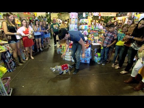 Criss - Criss asks the customers in a toy store to bring him a group of stuffed animals. They're amazed when he makes one walk and fall over on command - and then pu...