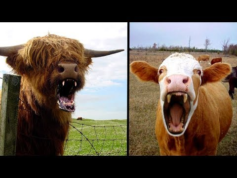 Top 10 Horrifying Facts About The Human Form Of Mad Cow Disease