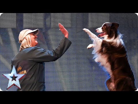un border collie in azione al britain's got talent del 2015