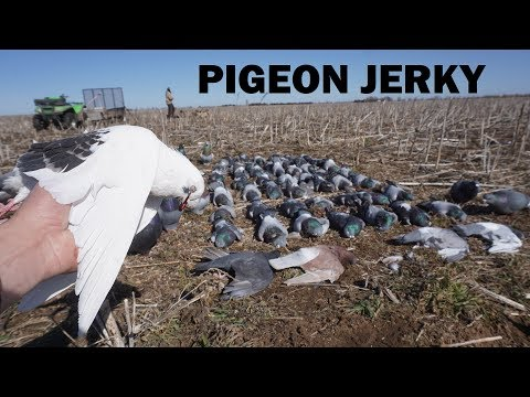 Pigeon Hunting Rare Birds!! (Catch and Cook)