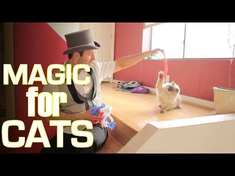 Magic Tricks For Cats!
