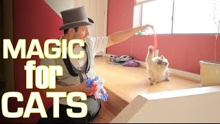 Magic For Cats :))