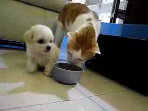 Perro vs. Gato