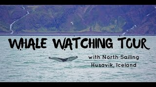 Whale Watching Tour - Husavik Iceland
