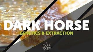 Darkhorse Genetics & Extracted Colorado  //  420 Science Club by 420 Science Club