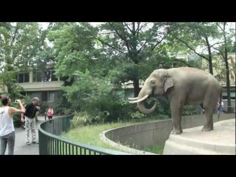 動物園的大象心情不好,竟然把大便噴在遊客的臉上!