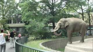 Elephant Spraying Poo on Man