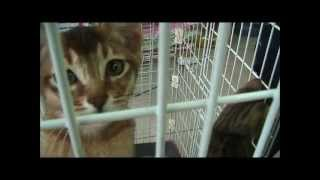 Pet Shop Cats Free Games YouTube video