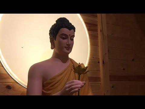 Thiền Tâm Bi và Đọc Cửa Vào Bất Tử | Linh Quy Pháp Ấn