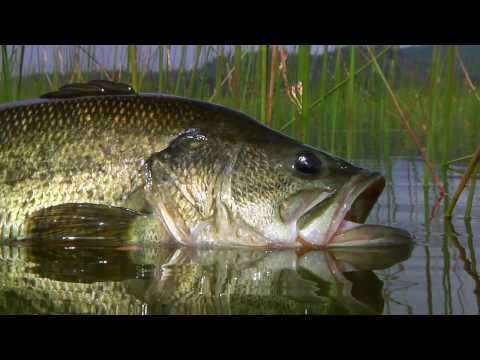 Bass Master Fly Fishing