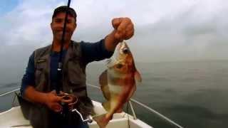 Video Pesca embarcada em 24 Outubro 2015 MP3, 3GP, MP4, WEBM, AVI, FLV Desember 2017