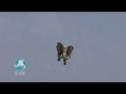 Amazing Jumbo Elephant Landing