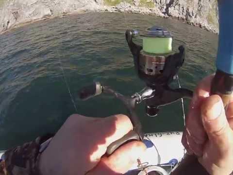 рыбалка на охотском море ловля белуги