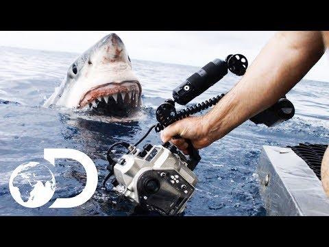 35ft Great White Shark Lurking in 'The Kill Zone'  Super Predator