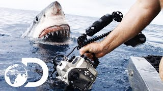 Video 35ft Great White Shark Lurking in 'The Kill Zone' | Super Predator MP3, 3GP, MP4, WEBM, AVI, FLV Februari 2019