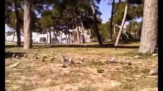 Попугаи в Санта Понса - YouTube