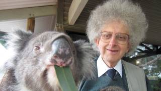Koalas And Eucalyptus