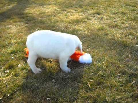 video of pookie at 7 weeks old