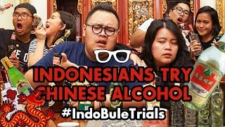 Video IndoBuleTrials: Indonesians Try Chinese Alcohol | Chinese New Year Edition! MP3, 3GP, MP4, WEBM, AVI, FLV Desember 2018