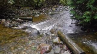A short video featuring salmon near Noons creek salmon hatchery in Port Moody and a heron eating a vole at the wetlands nearby.