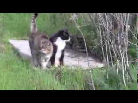 i gatti più felici del mondo