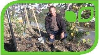Wie pflanzt man Fruchtfreundinnen