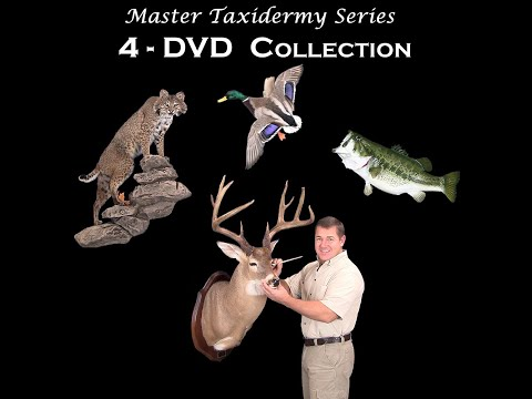 How To Taxidermy – Deer, Fish, Birds, Big Game