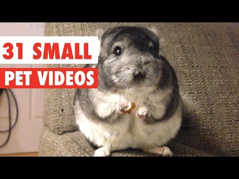 A Video Compilation of Small Pets