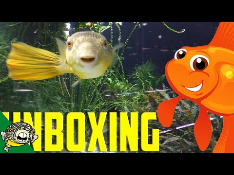 Unboxing Aquarium Fish. Goldfish Included! Quarantine Time Lapse._Akvárium. Heti legjobbak